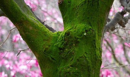 Ecologie Humaine Intégrale, nature arbre