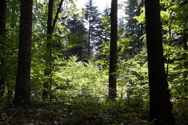 Création forêt